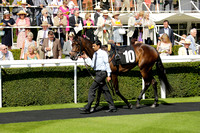 Race 1 Goodwood The Goodwood Racehorse Owners Group Maiden Stakes. Tuesday 2013.09.03 www.polopictures.co.uk